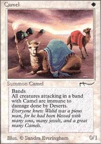 Camel - Arabian Nights