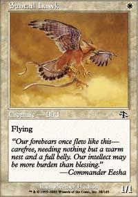 Suntail Hawk - Judgment