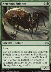 Fileuse arachnus -