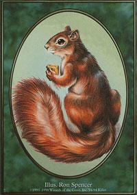 Squirrel - Unglued