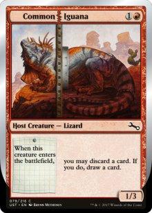 Common Iguana - Unstable